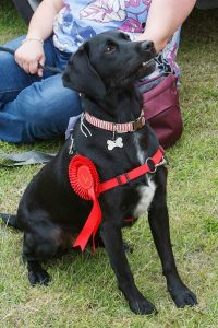 Dog Show – Sherfield on Loddon Village Fête